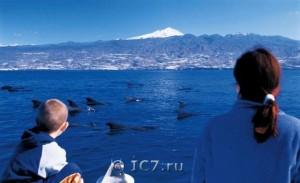 Фото киты и дельфины на Канарах у острова Тенерифе
