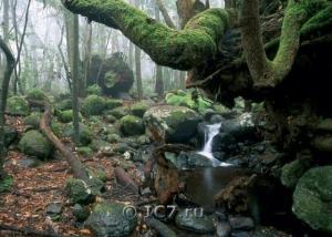 Национальный парк - Ла Гомера